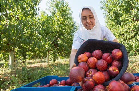Turkey's Largest Fruit Growing <br>and Fruit Juice Processing Company