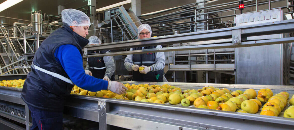 A Leader In Fruit Processing <br>And Export
